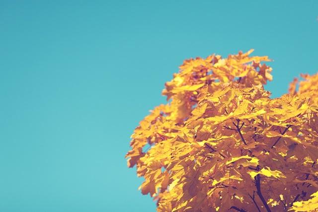 za co lubić jesień?