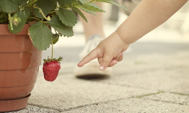 czy można zmuszać dziecko do weganizmu?