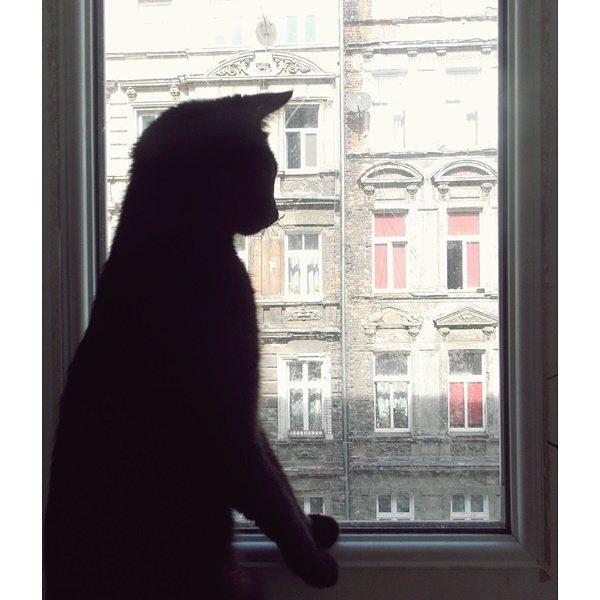 za oknem, WYZWANIE Z JEST RUDO