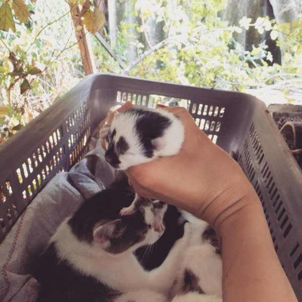 mortycja koty