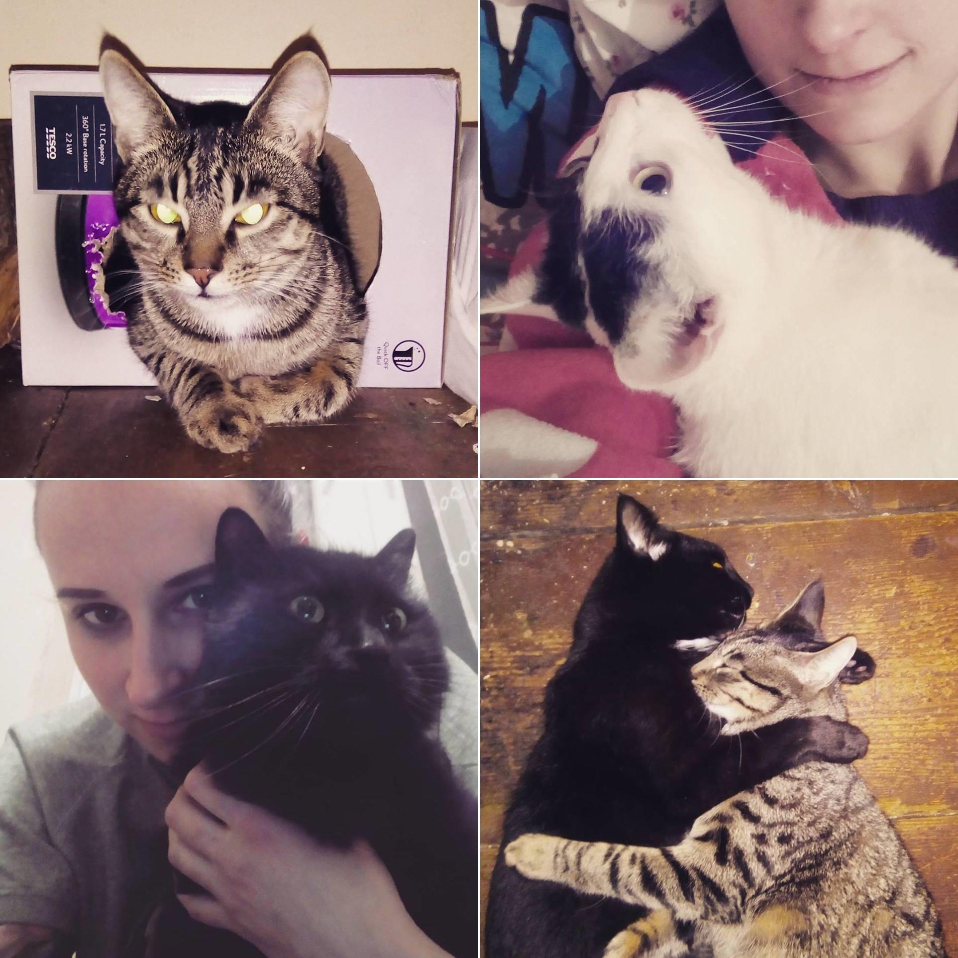 mortycja i koty