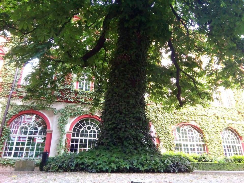 piękne miejsca we Wrocławiu -mortycja