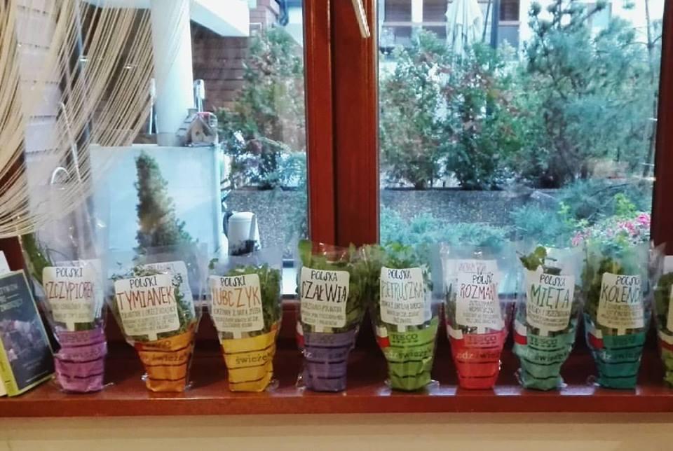 ogródek ziołowy na oknie