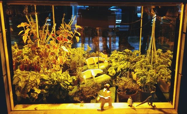 domowa mini szklarnia na zioła