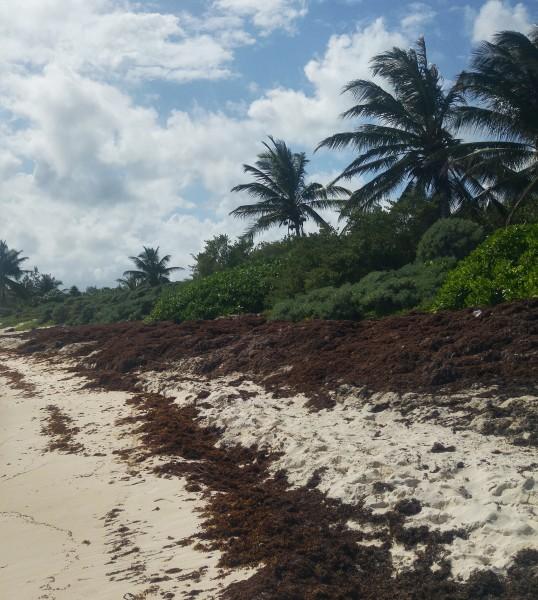 xphua glony na plaży