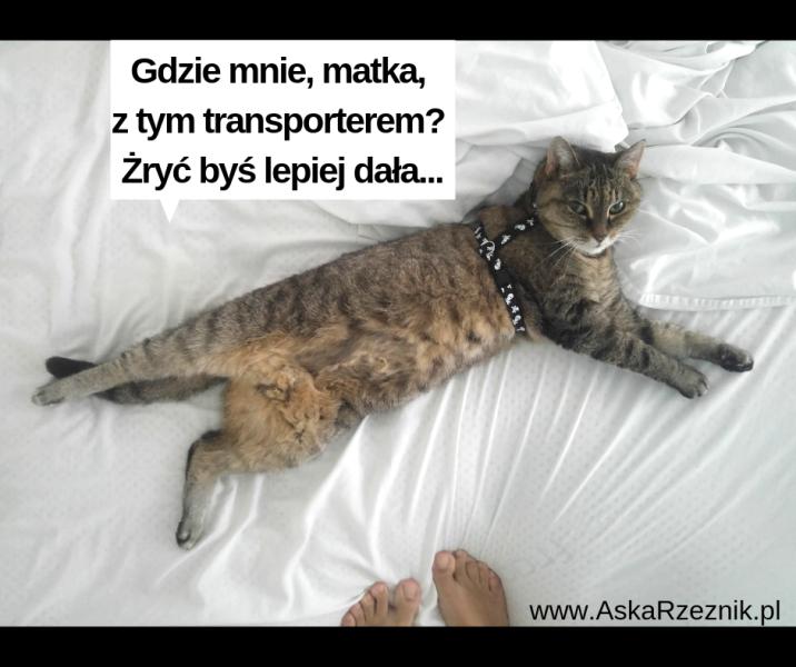 jak przewieźć kota za granicę?