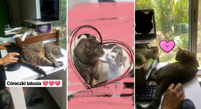 koty Aśki Rzeźnik - Borsuk Maurycy i Pingwin Tornado